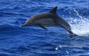 sea, dolphin, jump