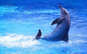mar, delfín, saltar