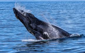 sea, whale, spray