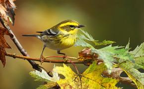 Vogel, Herbst, Zweig