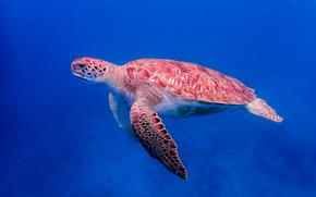 mare, Maritime, tartaruga