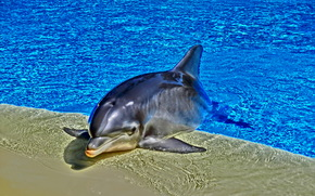 dolphinarium, pool, dolphin