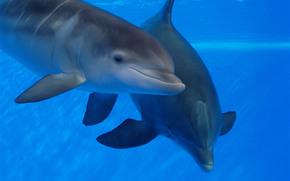 дельфинарий, бассейн, дельфины