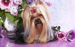 dog, Dog, animals, puppy, Puppies, hairstyle, Flowers