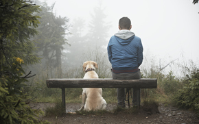 dog, Dog, animals, guy, dog, park, fog, bench