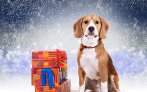 dog, Dog, animals, puppy, Puppies, winter, gifts, snowfall, New Year, holidays