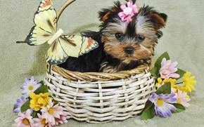 собака, собаки, животные, щенок, щенки, корзинка, цветы