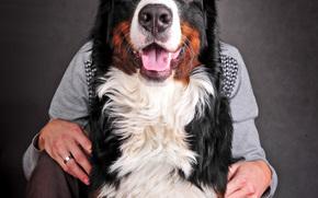 собака, собаки, животные, парень, мужчина, пёс, портрет, морда, лицо