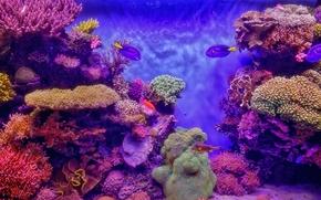 Aquarium, аквариум, морской, рыбы