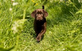 собака, собаки, животные, щенок, щенки, трава, прогулка, лето