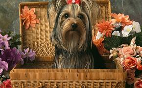 cane, Cane, animali, cucciolo, Cuccioli, valigia, Fiori