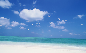 agua, mar, océano, naturaleza, playa, cielo, recreación, Relajarse, verano, GAVIOTAS