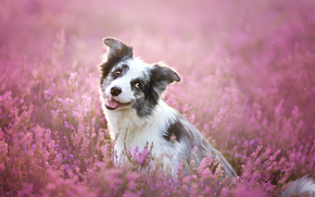 dog, Dog, Flowers, meadow, portrait, Snout, animals, puppy, Puppies