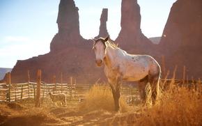 лошадь, конь, лошади, кони, животные, Америка, природа