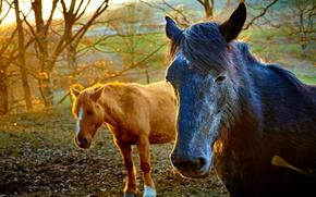 лошади, кони, животные, природа