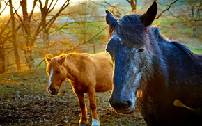 cavallo, Cavalli, animali, natura