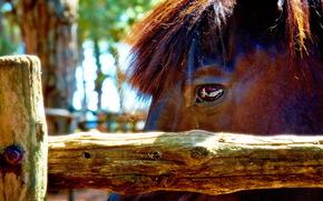 horse, horse, horse, Horses, animals, nature, eyes, view