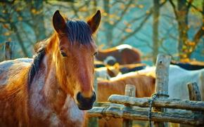лошадь, конь, лошади, кони, животные, природа