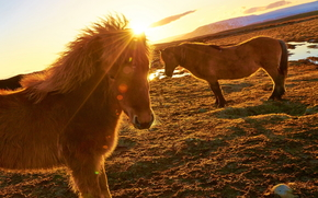 horse, horse, horse, Horses, animals, nature