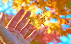 autumn, sheet, hand, palm, positive, sunny, Macro, nature