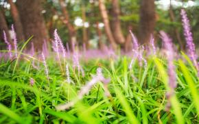 макро, стрекоза, трава, цветы, природа, боке, насекомые