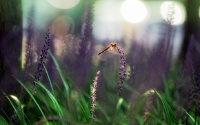 Macro, dragonfly, grass, Flowers, nature, bokeh, Insects
