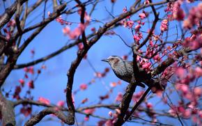 pájaro, pájaros, PRIMAVERA, floración, Flores, árbol