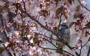 bird, birds, SPRING, flowering, Flowers, tree