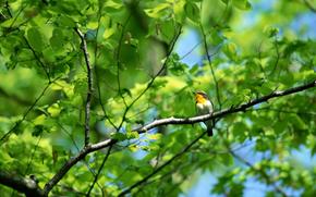 pájaro, pájaros, follaje, árbol, naturaleza