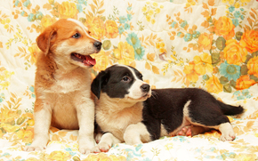 dog, Dog, puppy, Puppies, animals, background, Flowers
