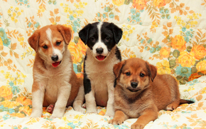 Hund, Dog, Welpen, Puppies, Tiere, Hintergrund, Blumen