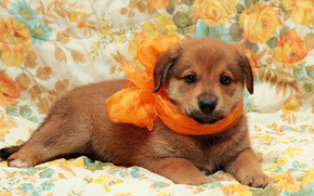 chien, Chien, chiot, Chiots, animaux, fond, Fleurs