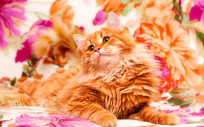 COTE, gatto, gattino, Red, sfondo, Fiori