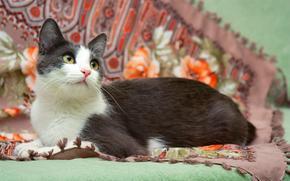кот, кошка, фон, ткань