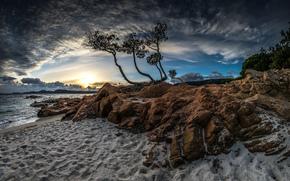 берег, море, дерево, небо, природа
