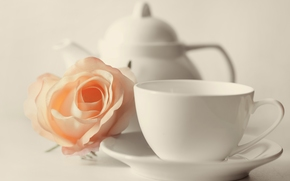 cup, mug, kettle, flower, rose, BUD