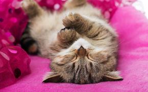 Kotek snu, kotek, śpiący, sen