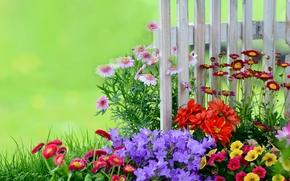 garden, flowerbed, fence