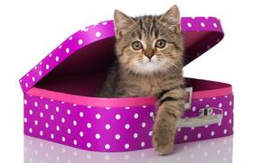 кошка, котёнок, взгляд, чемодан