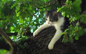 кот, кошка, лапы, на дереве, дерево, дуб