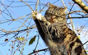 COTE, gatto, FILIALE, albero, sull'albero