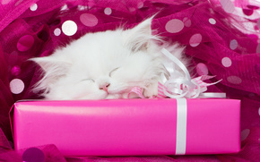 biały kociak, Kotek snu, kotek, biały, śpiący, kaganiec, sen, prezent, TULLE