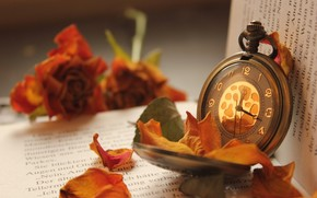 watch, watch, book, foliage, Flowers, dry