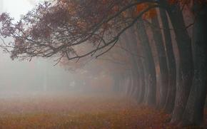 autunno, parco, alberi, nebbia, FILIALE, VICOLO