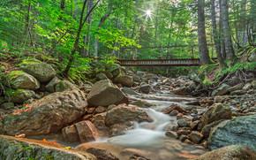 Wald, Bäume, Fluss, Wasserfall, Rocks, Natur