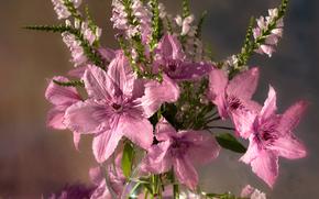 Fiori, bouquet, vaso, ancora vita