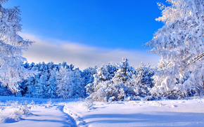 winter, snow, forest, trees, footpath
