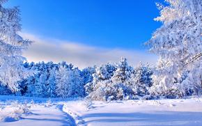 зима, снег, лес, деревья, тропинка