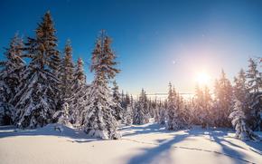 Карпаты, Украина, зима, снег, лес, деревья, ели