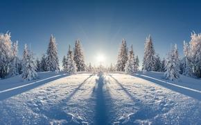 Карпаты, Украина, зима, снег, деревья, ели
